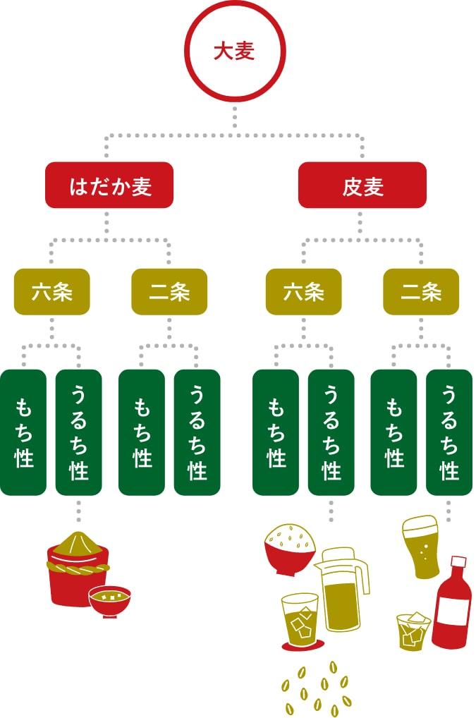 大麦の種類と特徴